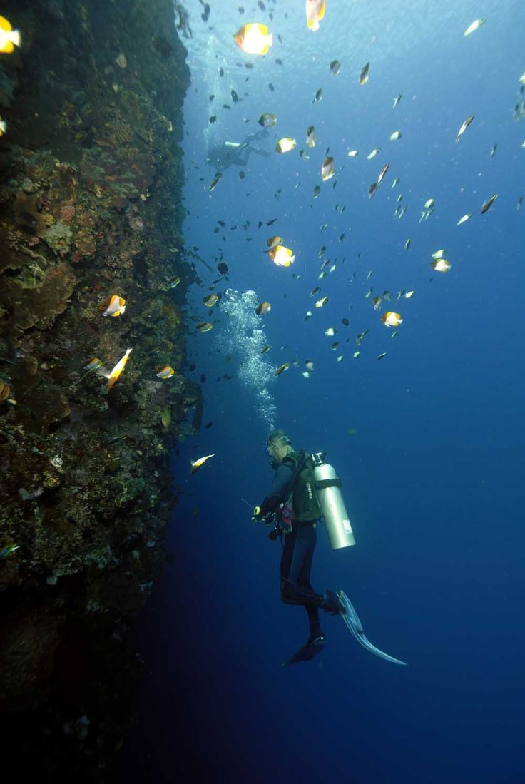 Breathtaking Underwater Life, Bunaken National Park, North Sulawesi. #VisitIndonesia #Traveling