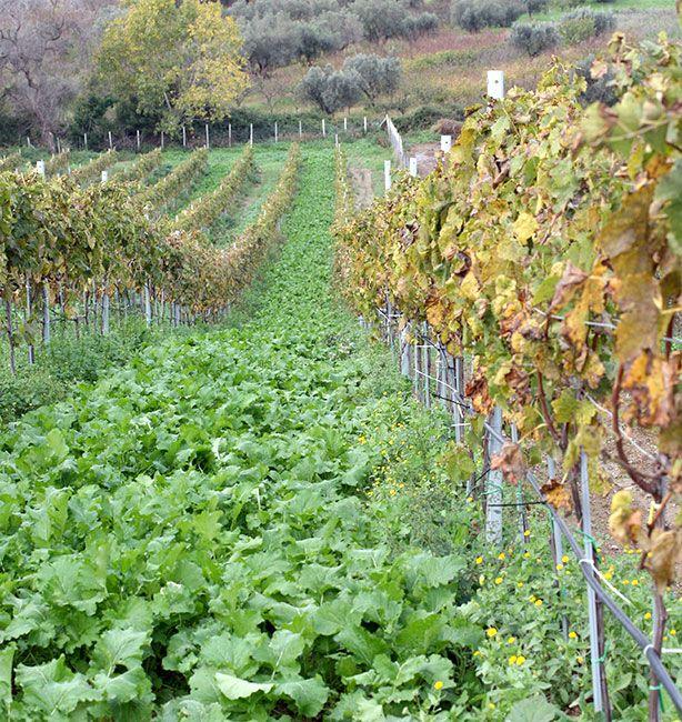 Il Laborante   http://www.ilpastonudo.it/in-giro-per-bio/il-laborante/