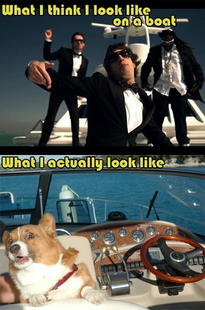 f360d0ae34accf3489a419aee9564529 classroom memes boating on a boat meme what the boat?! pinterest meme, memes and,Boat Meme
