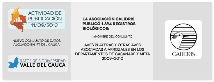 Actividad de publicación 11/09/2013