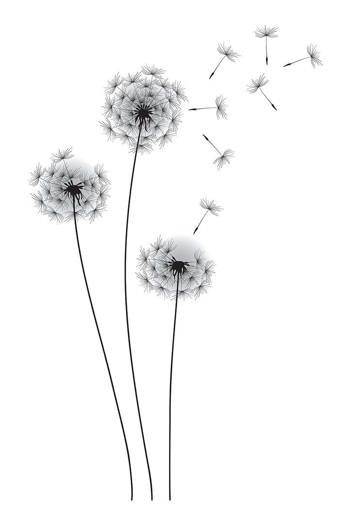 Dandelion Flower Line Drawing : Dandelion black and white drawing imgkid the