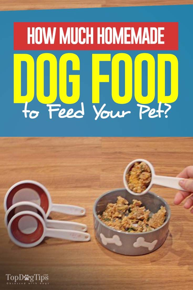 How Much Homemade Dog Food To Feed Your Dog Dog Food Recipes