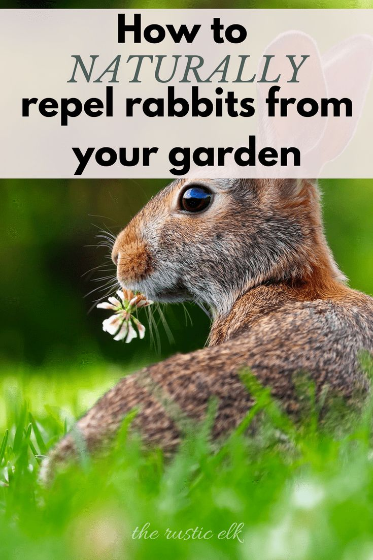 6 natural ways to repel rabbits from the garden garden