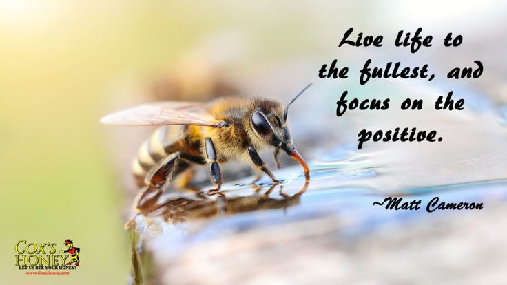 """Quote of The Week for September 25, 2017. Live Life To The Fullest Quote by Matt Cameron. """"Life life to the fullest, and focus on the positive."""" ~Matt Cameron"""