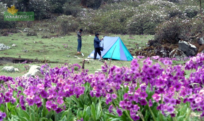 Look where we were !!!! Something which was beyond the level of Imagination. Rhododendron was in full bloom in the background and Primula was at ground level. We really were blessed!    Day 7: Gomathang - Kokling - Punding (26th May, 2012)