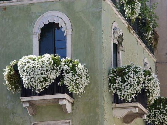 Oltre 25 fantastiche idee su Fiori da balcone su Pinterest  Giardino sul bal...