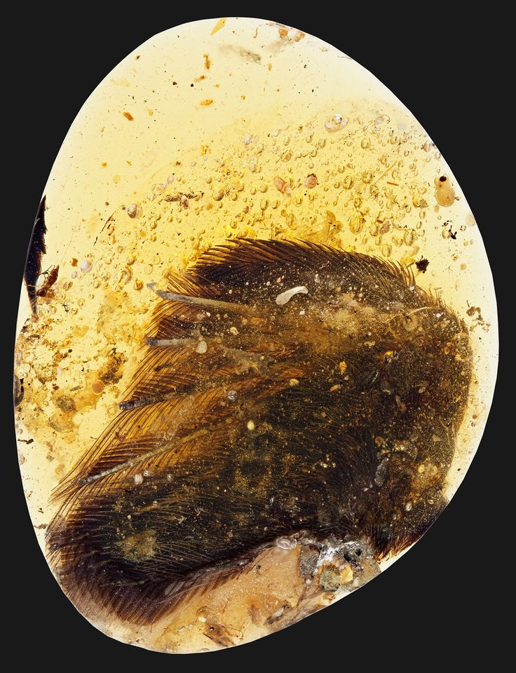 Bone, tissue, and feathers show the almost 100-million-year-old wings are remarkably similar to those on modern birds.
