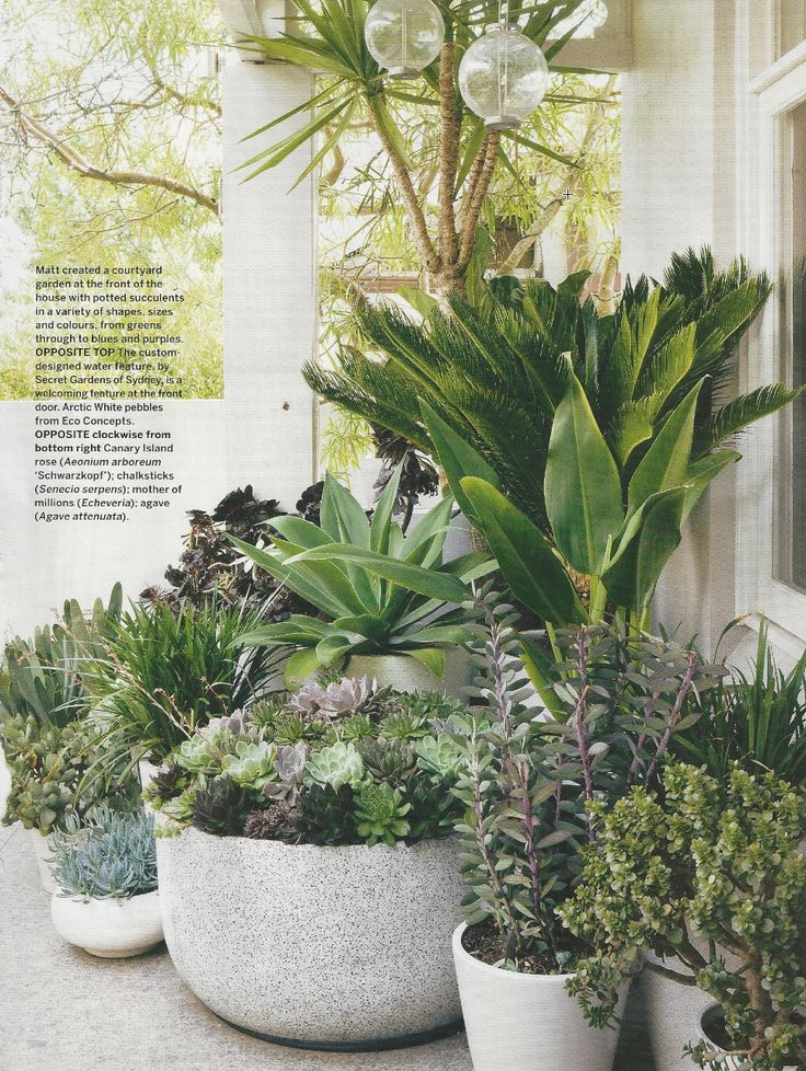 Great Use Of Succulents In Pots And I Can Grow Them