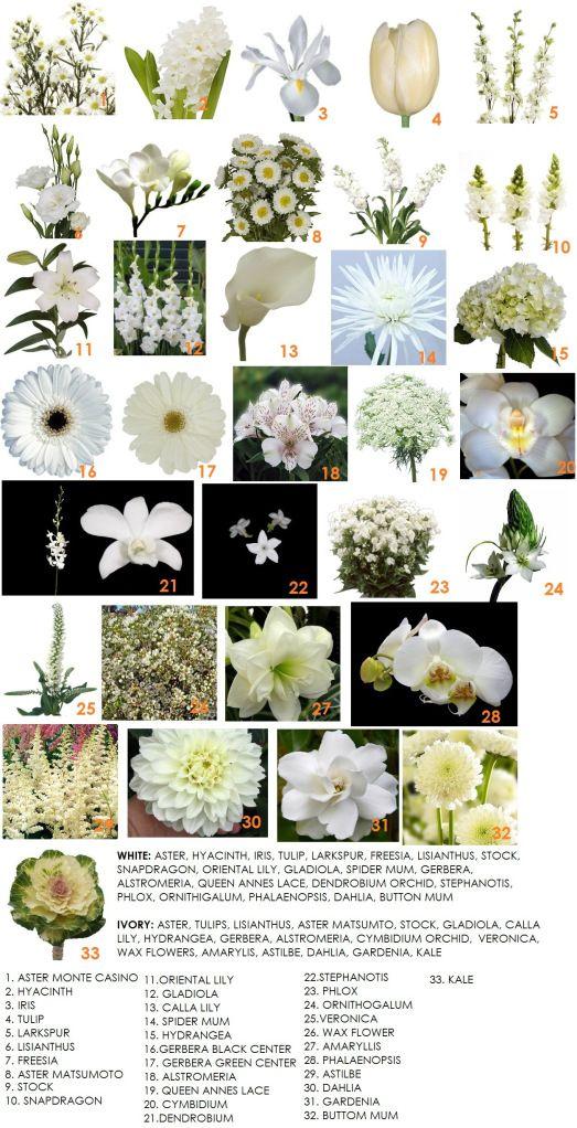 63 best types of flowers images on pinterest beautiful flowers bridal bouquet modern petals blog white flowers nameswhite mightylinksfo