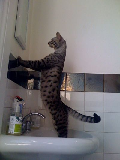 Mirror mirror on the wall.... Yes you are right I am the best !!