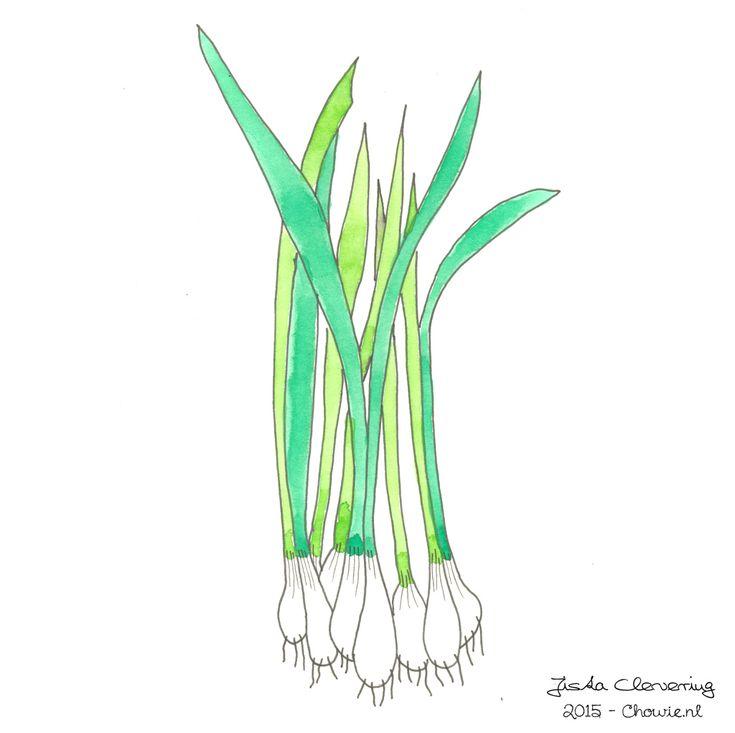 Bosuitjes of lenteuitjes :) Illustratie door Jiska Clevering-Hartsuiker. Gemaakt met fineliners en ecoline. Sterrig verzorgt illustratieworkshops.
