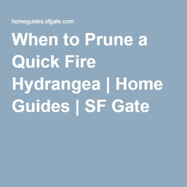 When to Prune a Quick Fire Hydrangea   Home Guides   SF Gate