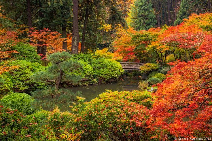 The Tranquil Garden by Scott Smorra on 500px Fall