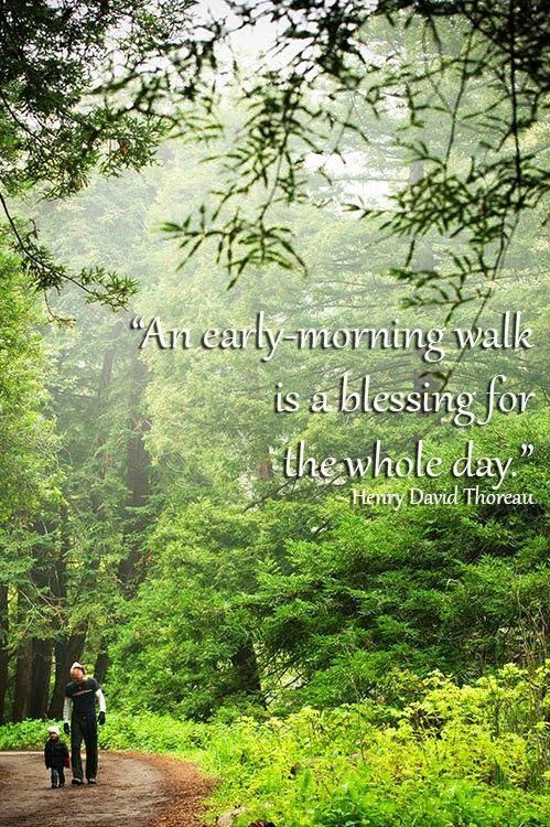 Pin by anita wandrag on blessings quotes nature quotes thoreau