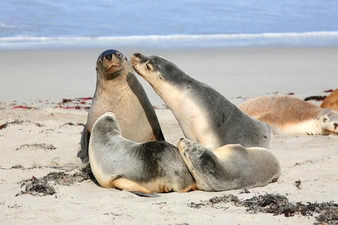 Kangaroo Island Ecopia Retreat, Home, Cottage, Cabins, Kangaroo Island, SA #wildlife #naturekangarooisland http://www.ozehols.com.au/holiday-accommodation/south-australia/kangaroo-island