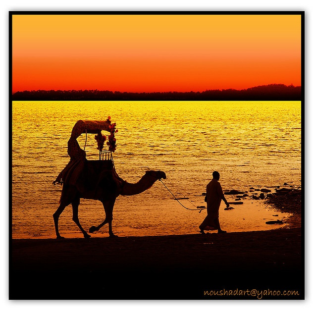 Take a camel to get water at an oasis in the Middle East.