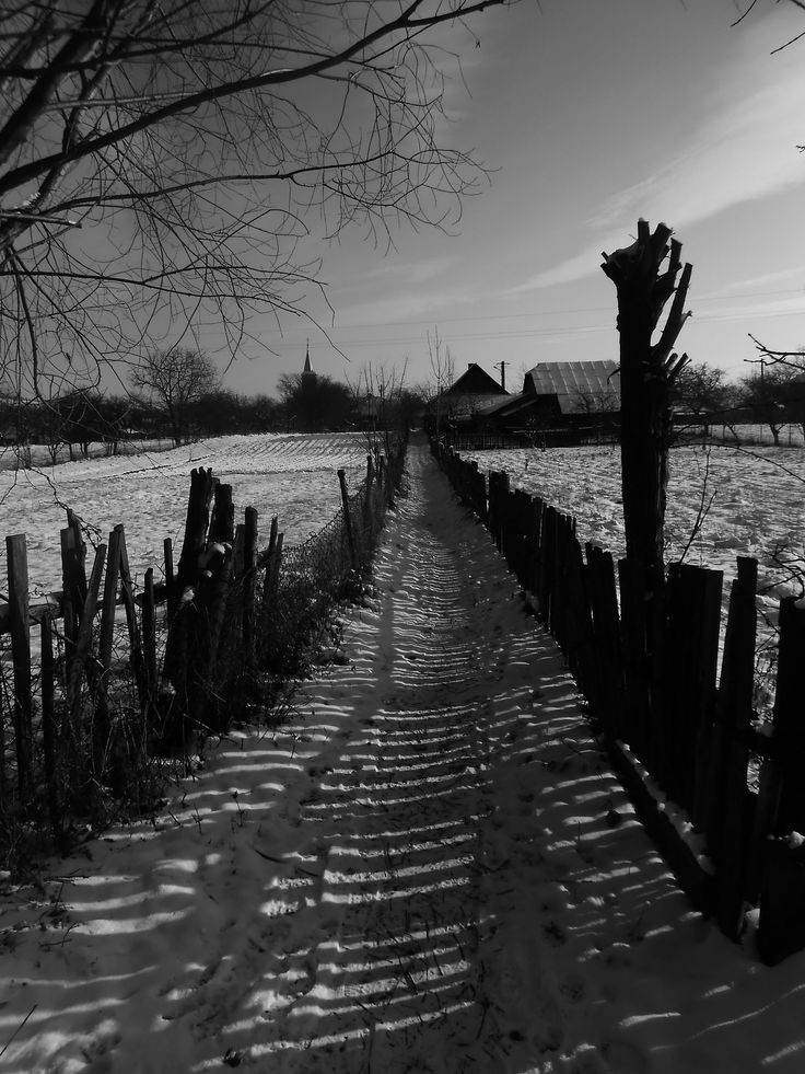 https://flic.kr/p/D1As7q | Paltinoasa   -   Bucovina  -  North Romania | Pathway in the middle of the fields.