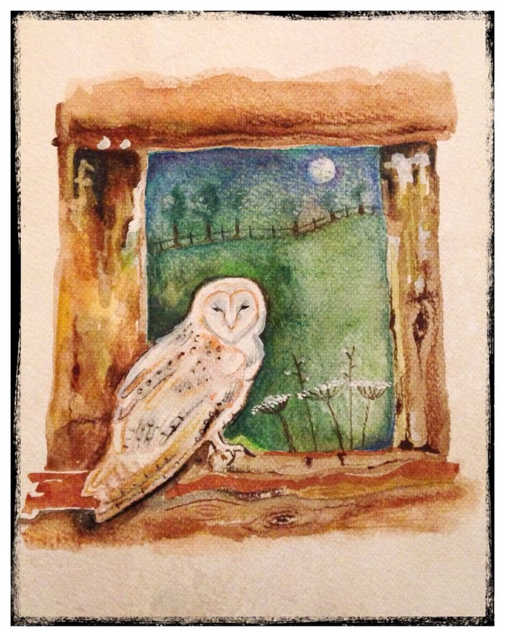 Barn owl in moonlight Rachael dunn