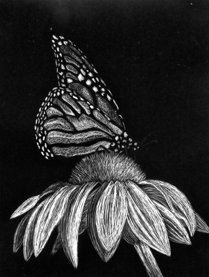 Butterfly Scratchboard Ltal Juevans