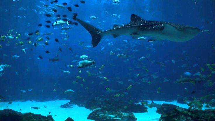 Ocean Voyager Part I - 6 Hour REAL VIDEO Ocean Aquarium...Atlanta