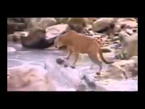 VIDEO IMPACTANTE: VEANLO !!! CUANDO NOS ALEJAMOS DE DIOS - YouTube