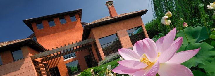 Lotus flowers in bloom at summer
