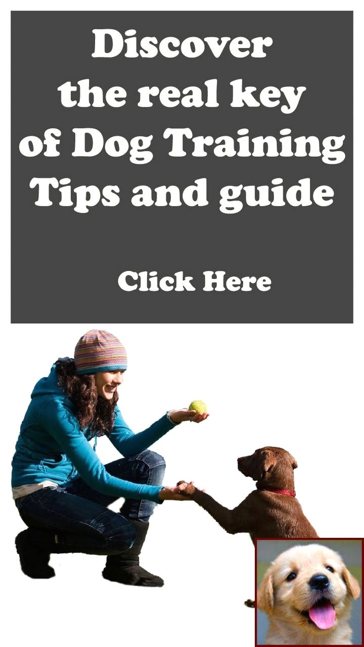 Potty Training A Puppy Border Collie And Dog Training Courses