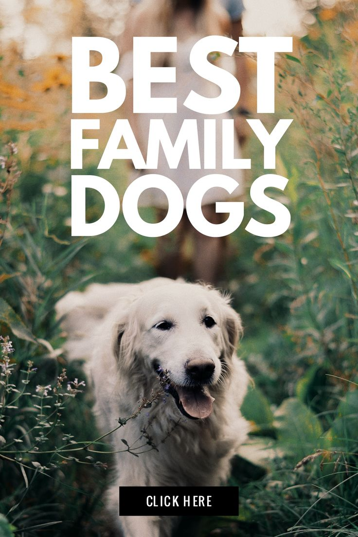 What are the best family dogs That don't shed For kids For