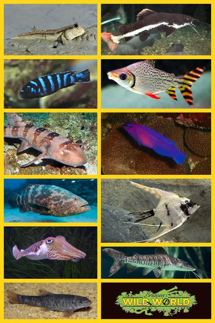 This is just a sampling of the amazing fish in Branson's ...