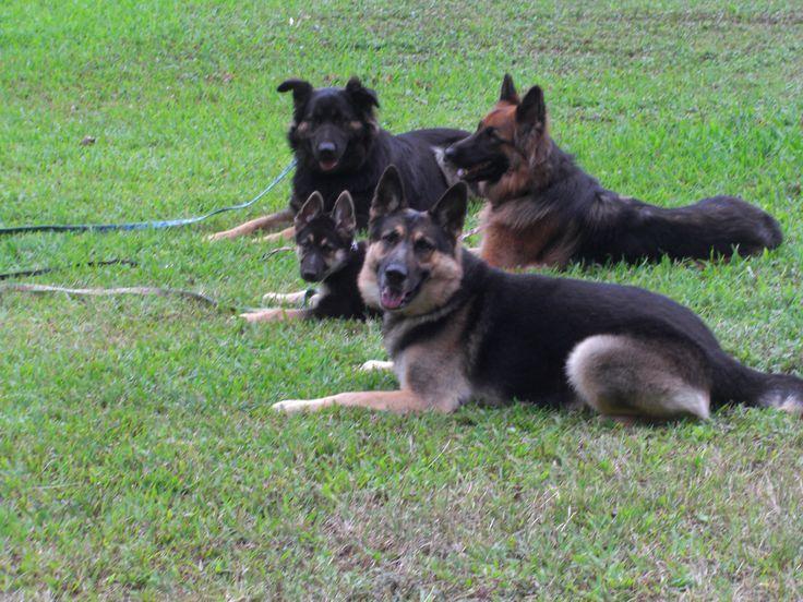 Submit Website Yahoo Search. German Shepherd Obedience