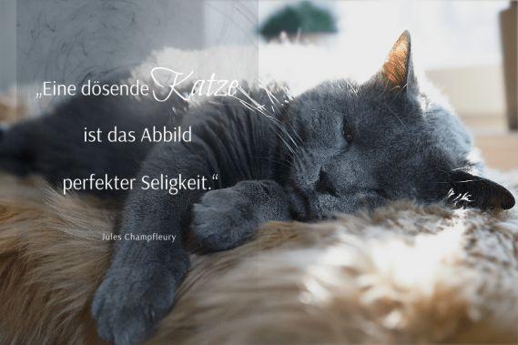 Spruchbilder-Katzensprueche-Katzenweisheiten-Katzenzitate-Eine-doesende-Katze
