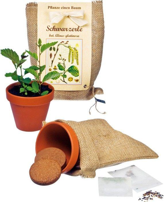 Privater Umweltschutz: Jetzt ziehen Hobbygärtner ihren eigenen Laubbaum und pflanzen ihn nach drei Wochen in den Garten. Die immergrüne Schwarzerle wird im Aussaat-Set angeboten und gilt als ist als unverwüstlich. Das Holz ist robust, wasserbeständig und Tontopf: ca. 10 x 10 x 9 cm