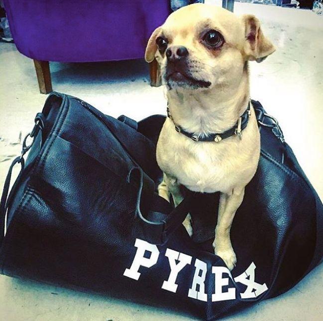MAXI  BAG  #new #colllection #pyrex #pyrexoriginal #maxibag #springsummer16 #nothingbetter #pyrexstyle #dog #streetstyle #mylifeispyrex
