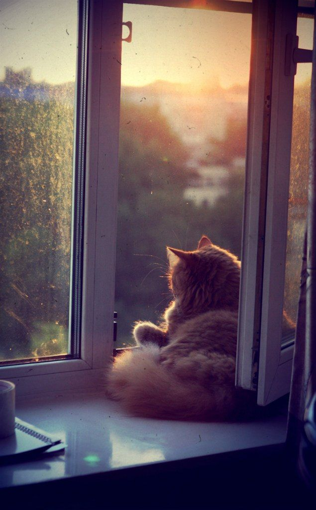 There is nothing kitty likes better than a spring day and an open window with screen. * * NO DOUBT.