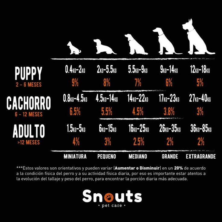 Puede parecer algo complicado, sin embargo en Snouts te explicaremos en detalle lo que necesitas para saber qué cantidad de dieta BARF darle a tu perro.