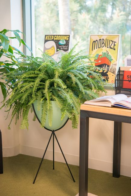 modern office plants. learn about the 21 best ferns for containers these beautiful foliage plants available in various shapes textures and colors provide interest shady modern office n