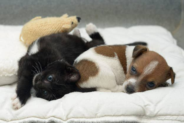 A Rejected Puppy And An Abandoned Kitten Adopt Each Other In 2020 Kittens And Puppies Puppies Puppies And Kitties