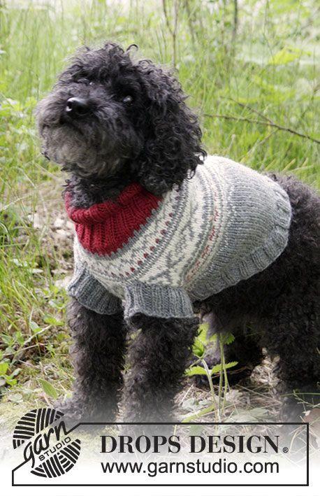 Mejores 1753 imágenes de perris en Pinterest | Suéteres para perros ...
