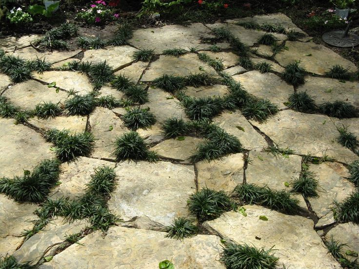mondo and stone paving - need this for the area where grass doesn't grow!