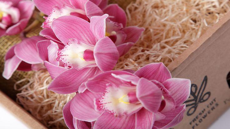 Орхидеи в подарочной коробке. Цветы в коробках и подарки. Доставка цветов и подарков.