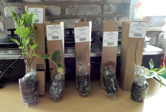 What to Expect When Buying Plants From an Online Retailer.
