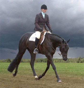 Awesome Hunter Under Saddle <3