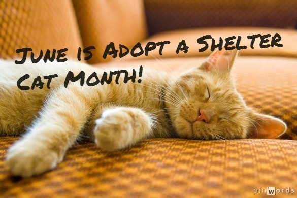 Image result for June is Adopt-A-Shelter-Cat Month gif