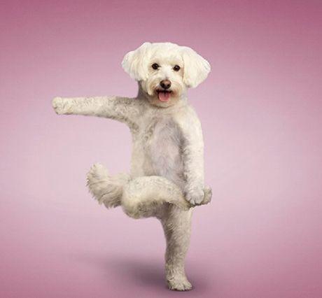 YoGa Dogs! <3 <3 <3