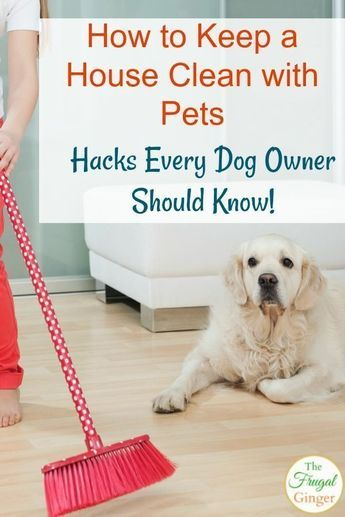 Use These Easy Tips To Keep A House Clean With Pets Even Shedding