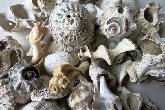 90pcs Assorted fractured Shells & fossils  by MrsBeachComber