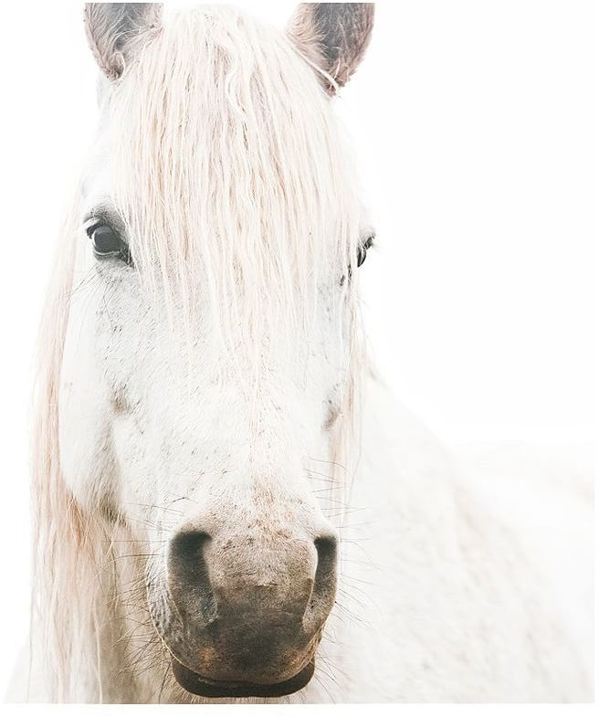 White on White Horse Print by Jennifer Meyers