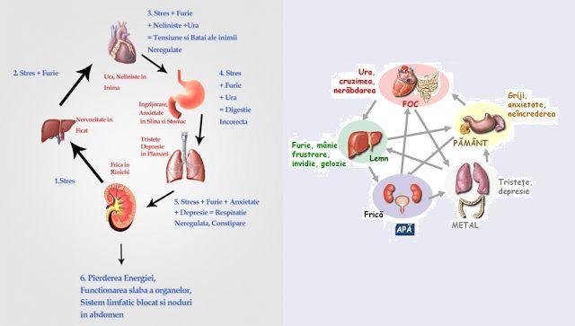 Legătura dintre emoţii şi organe