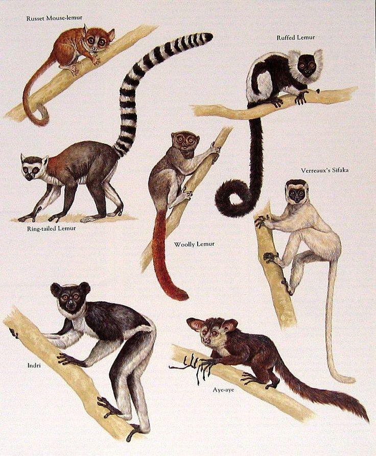 Image Result For Animal Print Facebook Timeline