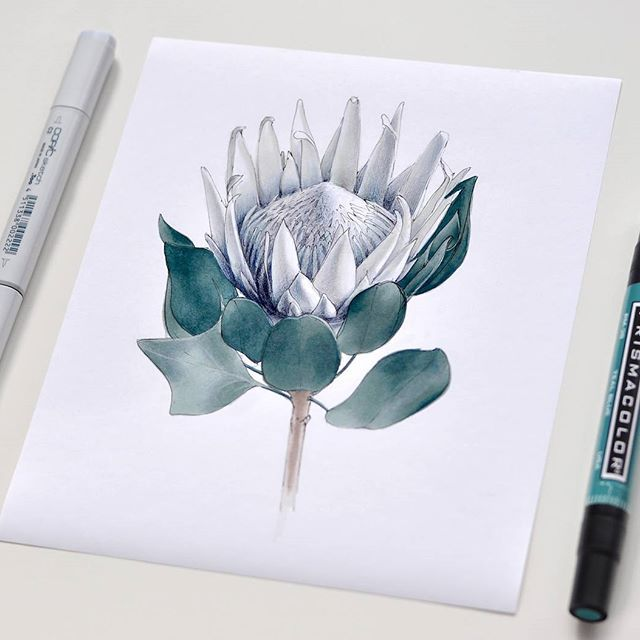 Наверное уже весна дает о себе знать. Хочется рисовать цветы постоянно) #sketch #sketchbook #sketchaday #illustration #sketchmarker #copic #copicsketch #copicart #liner #colorpallet #colorpencils #prismacolor #art #drawing #sketcher #room #interior #floral #flowers #botanical #protea #spring #dalerrowney #markers